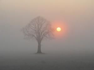 Träd mot soluppgång
